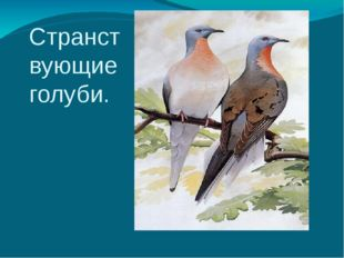 Странствующие голуби.