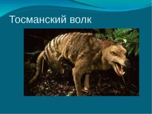 Тосманский волк