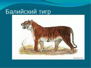Балийский тигр