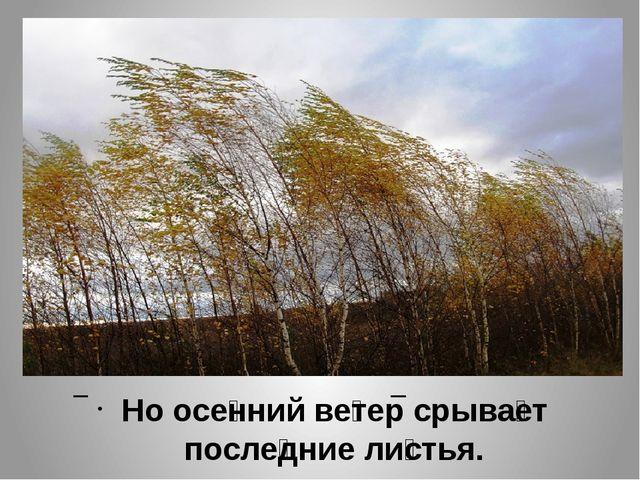 Но осе́нний ве́тер срыва́ет после́дние ли́стья.
