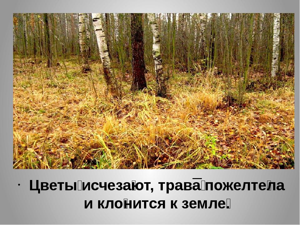 Цветы́ исчеза́ют, трава́ пожелте́ла и кло́нится к земле́.