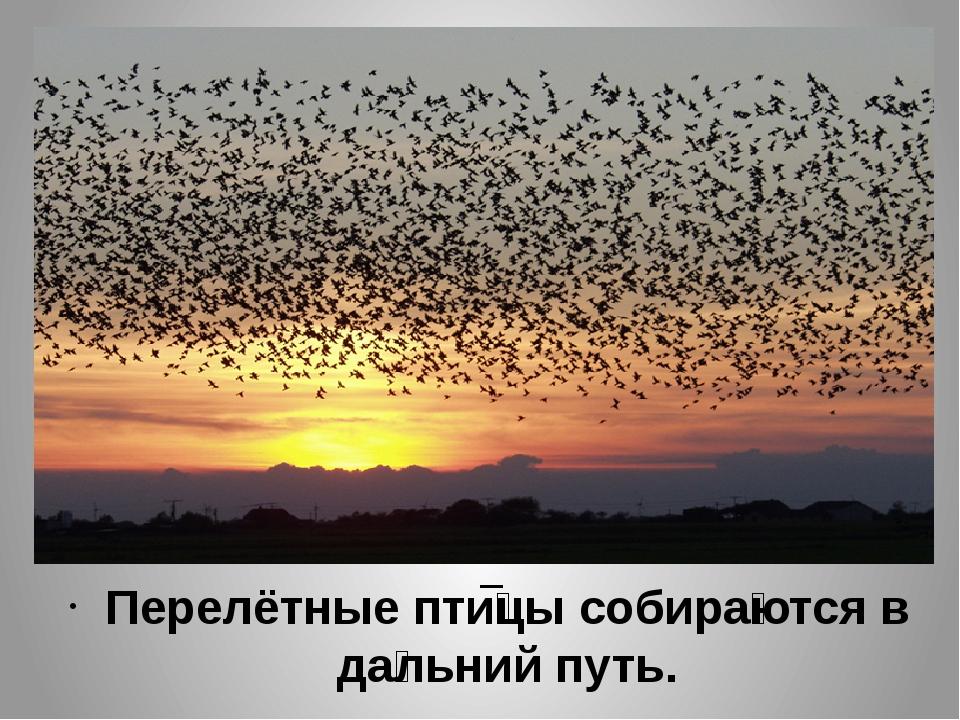 Перелётные пти́цы собира́ются в да́льний путь.