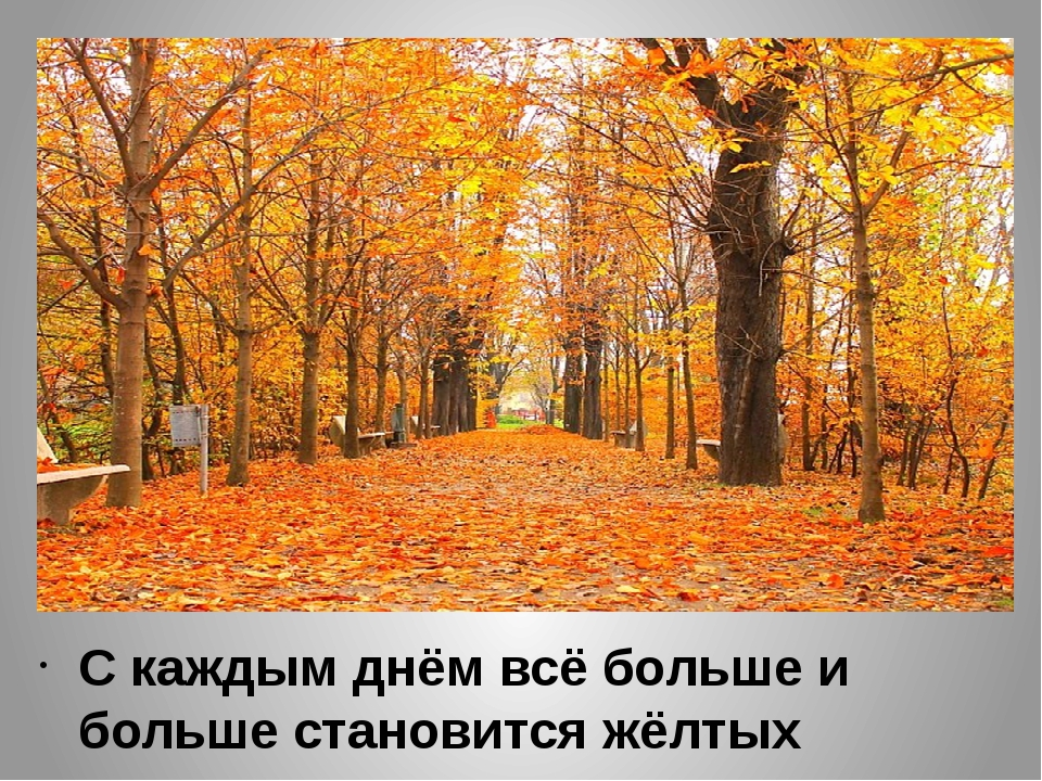 С каждым днём всё больше и больше становится жёлтых листьев.