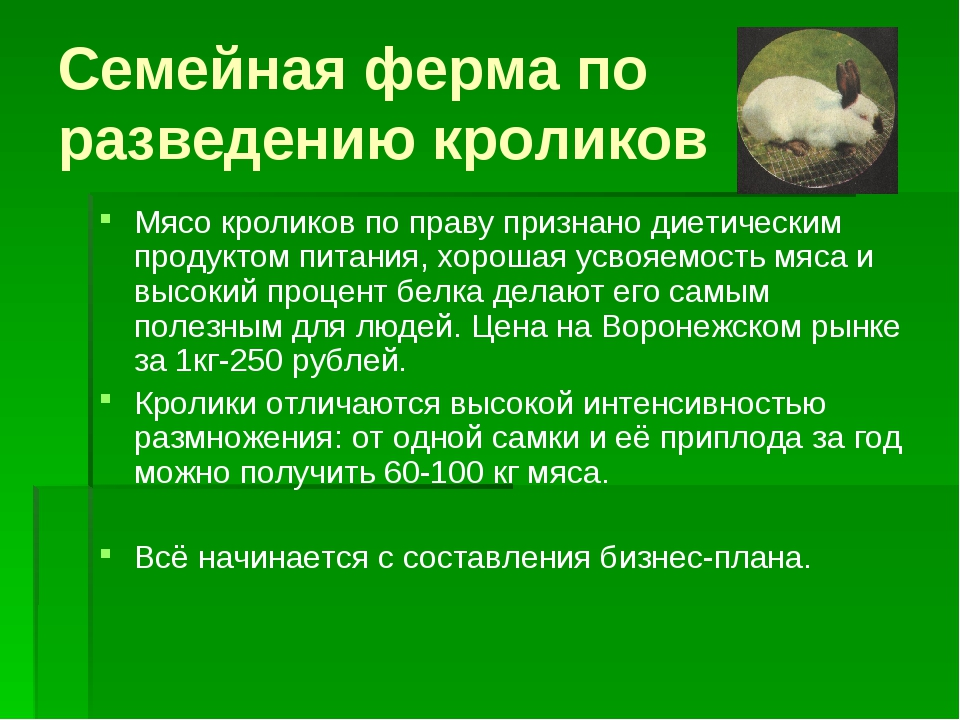 Семейная ферма по разведению кроликов Мясо кроликов по праву признано диетиче...