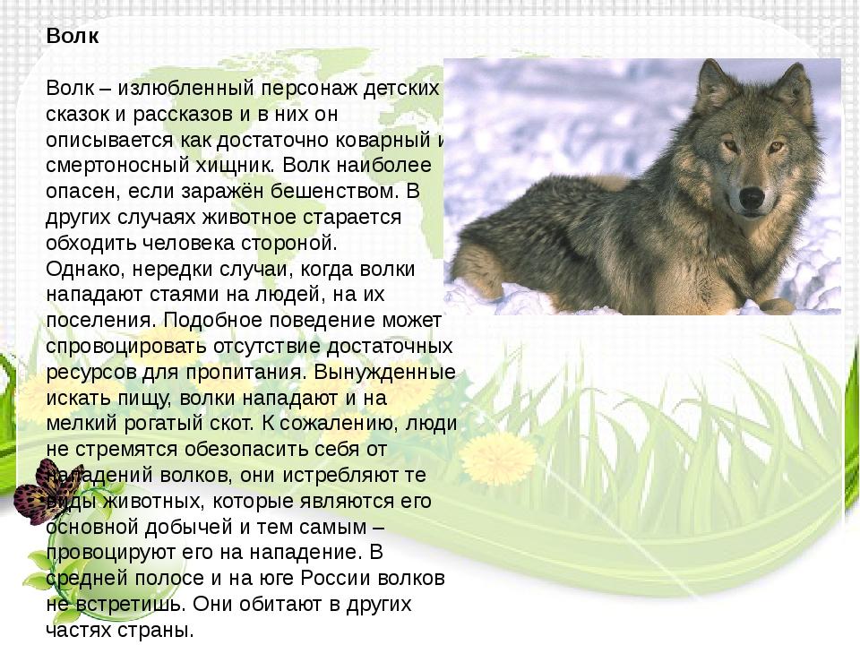 Беременная волчица самый опасный зверь 402