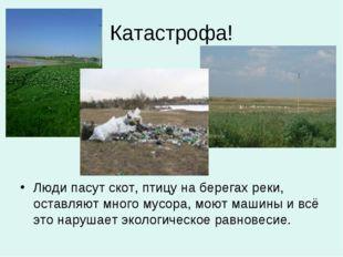 Катастрофа! Люди пасут скот, птицу на берегах реки, оставляют много мусора, м