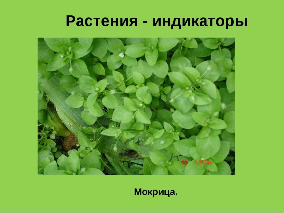 Какие сорняки растут на кислых почвах фото