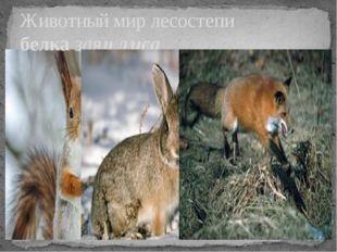 Животный мир лесостепи белка заяц лиса