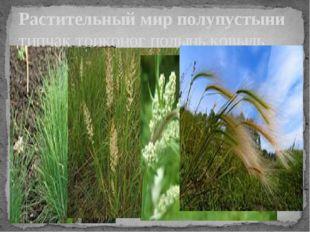 Растительный мир полупустыни типчак тонконог полынь ковыль