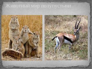 Животный мир полупустыни
