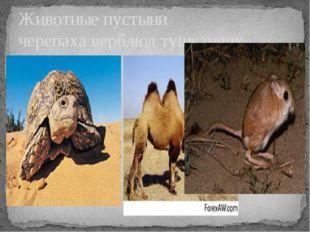 Животные пустыни черепаха верблюд тушканчик