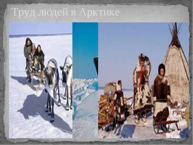Труд людей в Арктике
