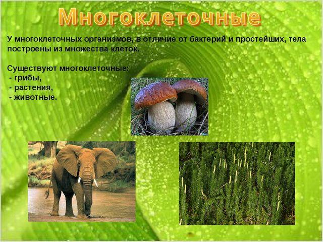 У многоклеточных организмов, в отличие от бактерий и простейших, тела построе...