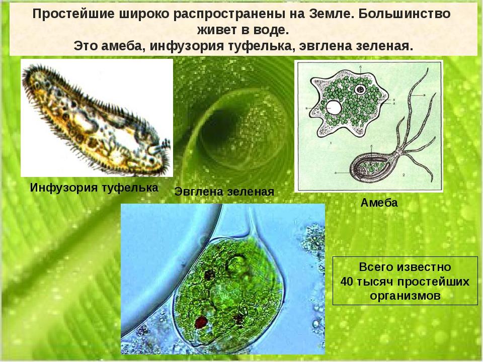 Простейшие широко распространены на Земле. Большинство живет в воде. Это амеб...