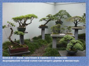 Бонса́й — (букв. «растение в горшке») — искусство выращивания точно