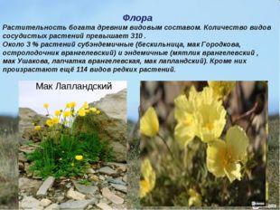 Флора Растительность богата древним видовым составом. Количество видов сосуди