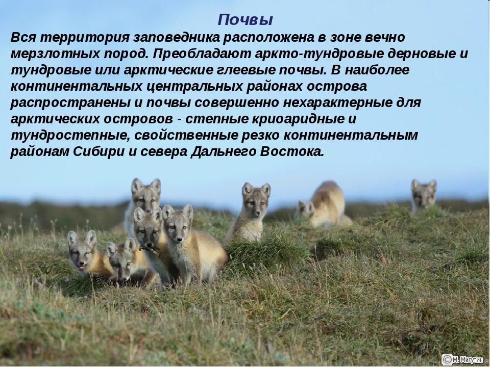 Почвы Вся территория заповедника расположена в зоне вечно мерзлотных пород. П...