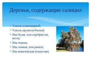 Тополь осиновидный; Тополь крупнозубчатый; Ива белая, или серебристая, ветла;