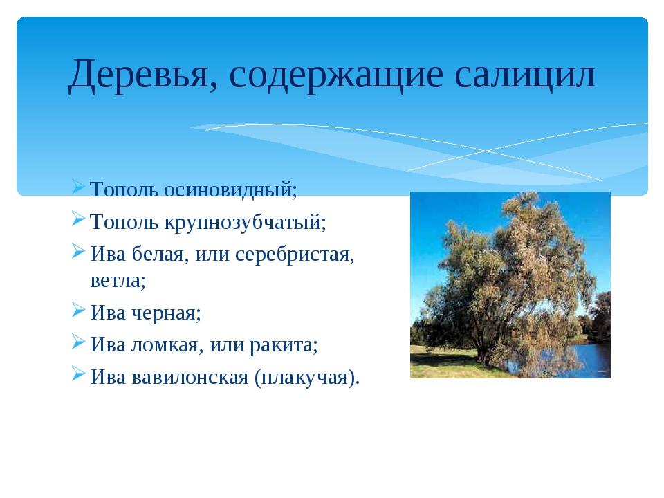 Тополь осиновидный; Тополь крупнозубчатый; Ива белая, или серебристая, ветла;...