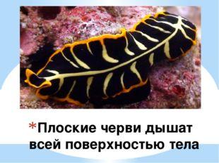 Плоские черви дышат всей поверхностью тела