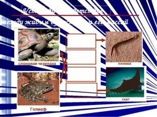 2 г 3,3 кг 200 кг 1,5 т Установи соответствие между живым существом и его мас
