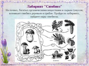 """Лабиринт """"Симбиоз"""" На почвах, богатых органическими веществами и сырым гумусо"""