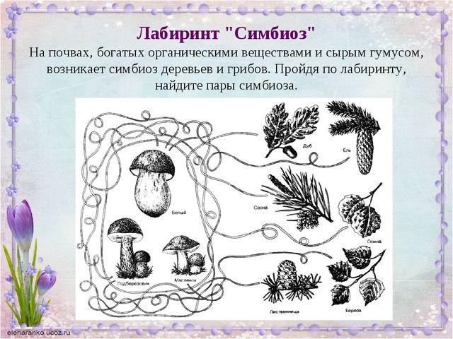 """Лабиринт """"Симбиоз"""" На почвах, богатых органическими веществами и сырым гумусо..."""