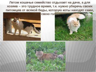 Летом кошачье семейство отдыхает на даче, а для хозяев – это трудное время, т