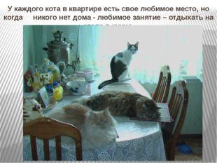 У каждого кота в квартире есть свое любимое место, но когда никого нет дома -