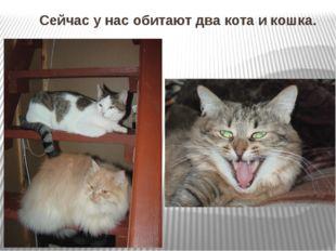 Сейчас у нас обитают два кота и кошка.