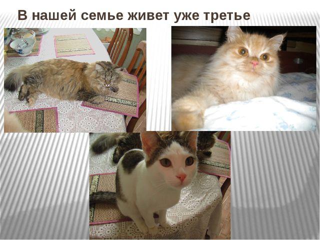 В нашей семье живет уже третье поколение котов .