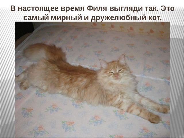 В настоящее время Филя выгляди так. Это самый мирный и дружелюбный кот.