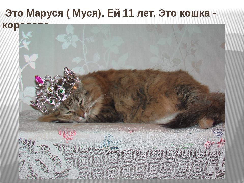 Это Маруся ( Муся). Ей 11 лет. Это кошка - королева.
