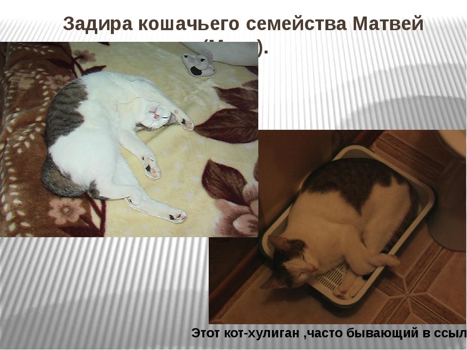 Задира кошачьего семейства Матвей (Мотя). Этот кот-хулиган ,часто бывающий в...