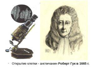Открытие клетки - англичанин Роберт Гук в 1665 г.