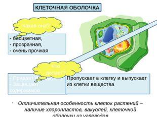 Отличительная особенность клеток растений – наличие хлоропластов, вакуолей, к