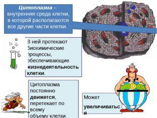 Может увеличиваться в объеме. Цитоплазма– внутренняя среда клетки, в которой