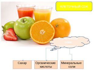КЛЕТОЧНЫЙ СОК В клеточном соке растворены Сахар Органические кислоты Минераль