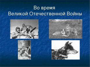 Во время Великой Отечественной Войны