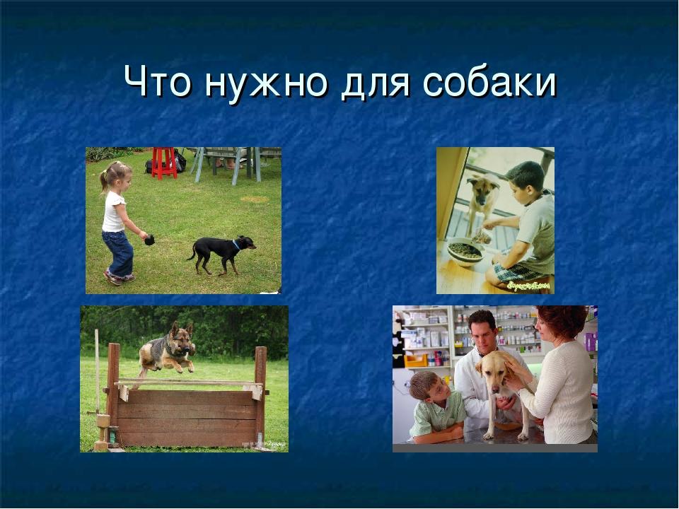 Что нужно для собаки