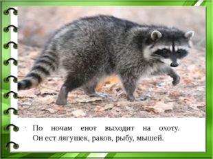 По ночам енот выходит на охоту. Он ест лягушек, раков, рыбу, мышей.