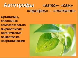 Автотрофы «авто»- «сам» «трофос» – «питание» Организмы, способные самостояте
