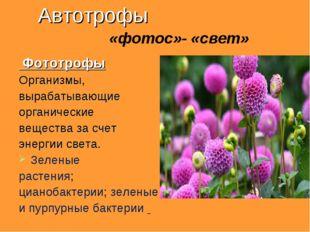 Автотрофы «фотос»- «свет» Фототрофы Организмы, вырабатывающие органические ве
