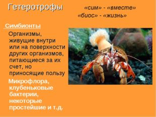 Гетеротрофы «сим» - «вместе» «биос» - «жизнь» Симбионты Организмы, живущие вн