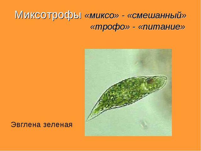 Миксотрофы «миксо» - «смешанный» «трофо» - «питание» Эвглена зеленая