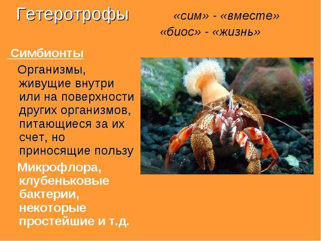 Гетеротрофы «сим» - «вместе» «биос» - «жизнь» Симбионты Организмы, живущие вн...
