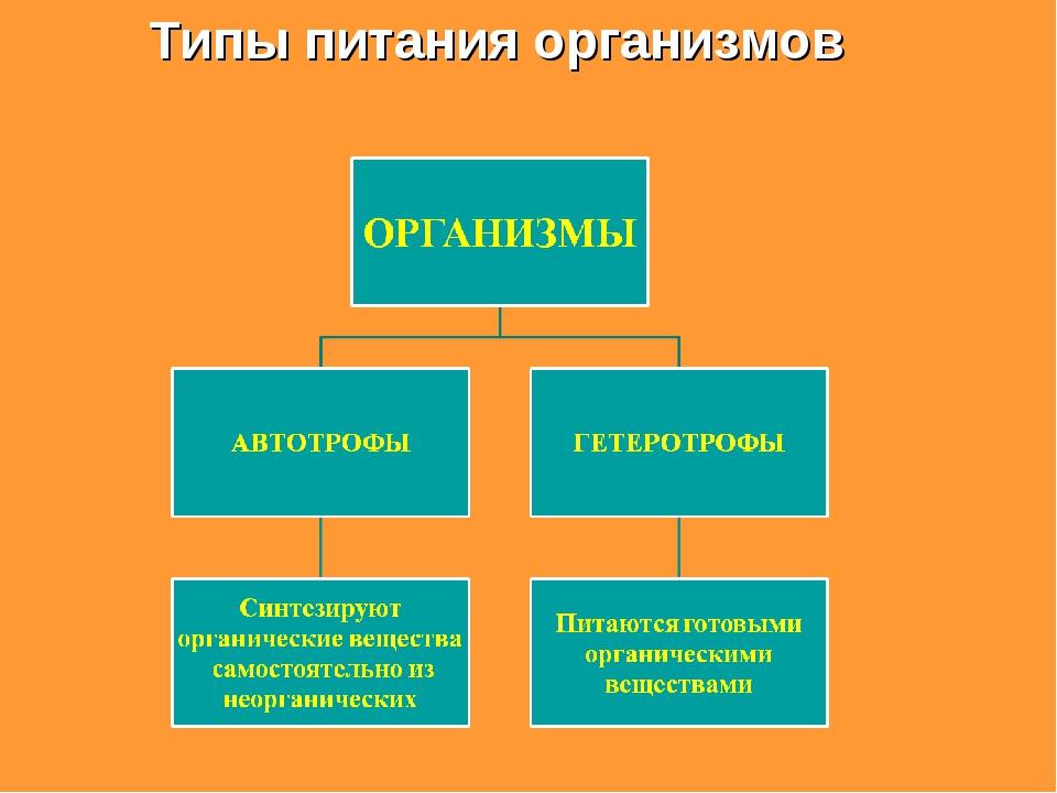 Типы питания организмов