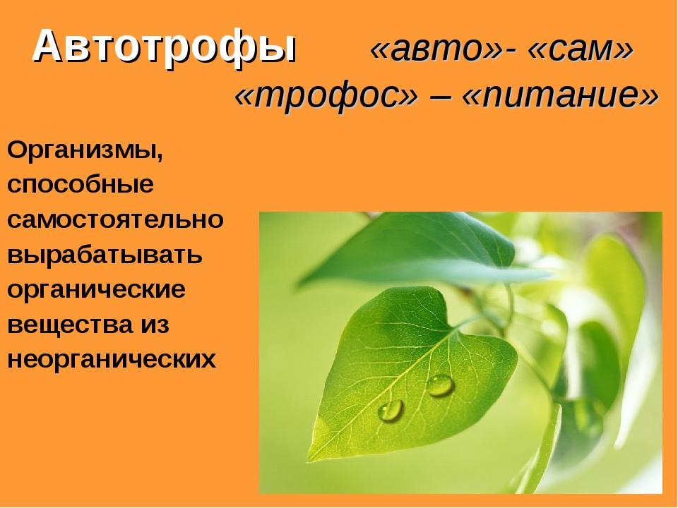 Автотрофы «авто»- «сам» «трофос» – «питание» Организмы, способные самостояте...