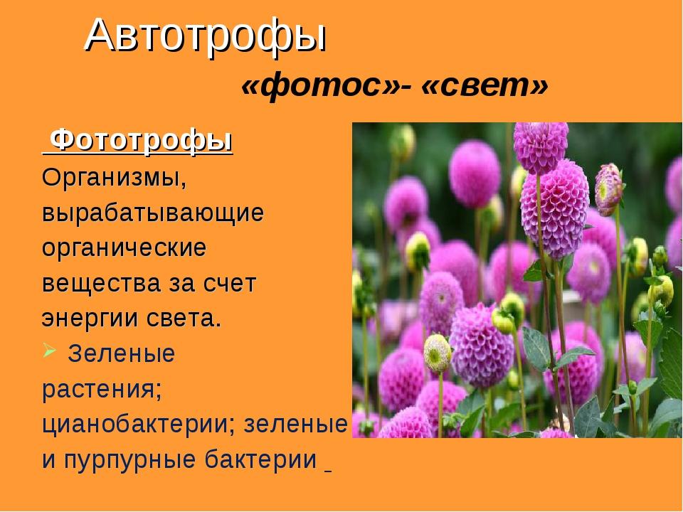Автотрофы «фотос»- «свет» Фототрофы Организмы, вырабатывающие органические ве...