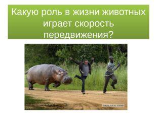 Какую роль в жизни животных играет скорость передвижения?